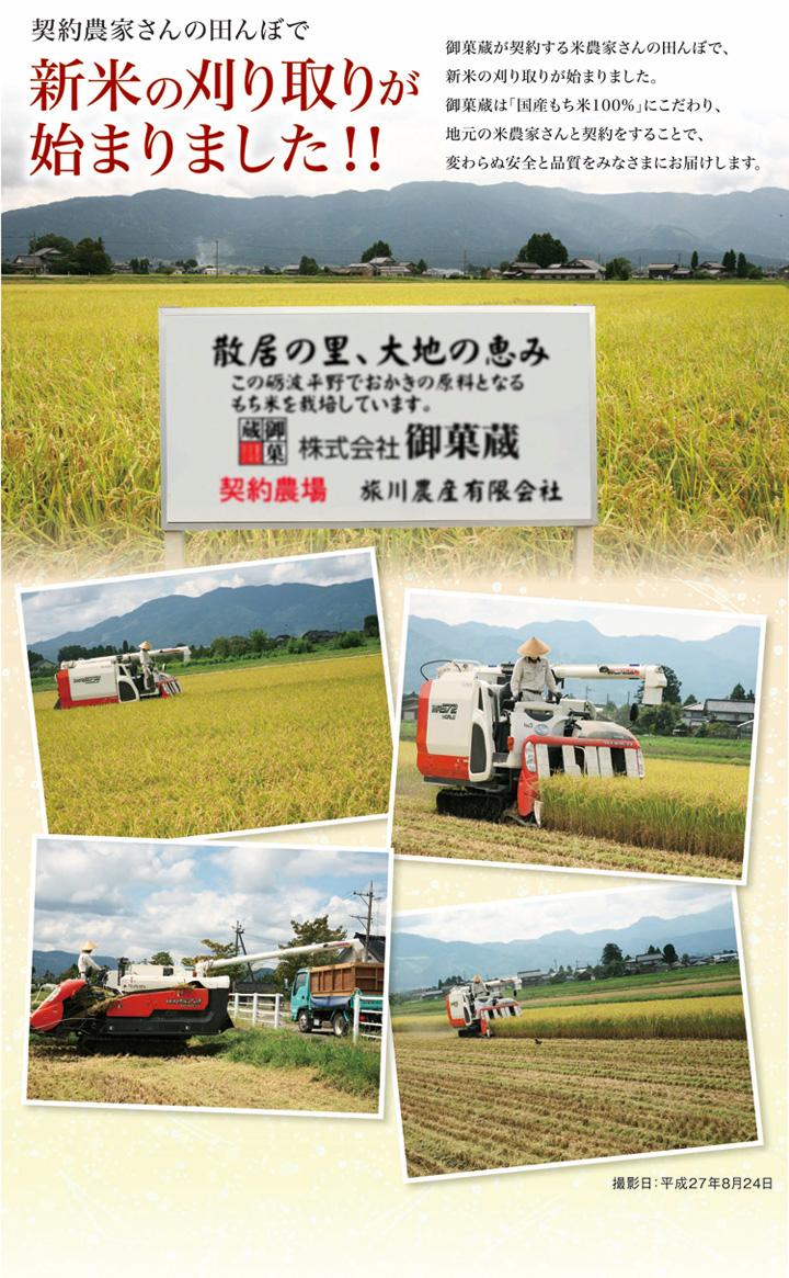 2015新米刈り取り